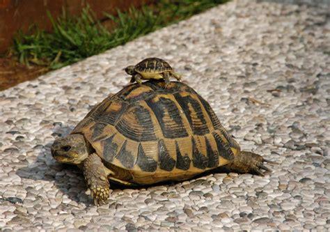 lada per tartarughe d acqua marzo 2013 archivi pillole dal mondo