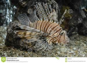 schwimmbad mit aquarium bunte fische die im aquarium schwimmen stockfoto bild