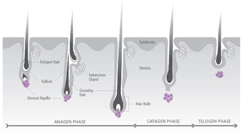 Aloe Vera Facts depilar system hair growth facts