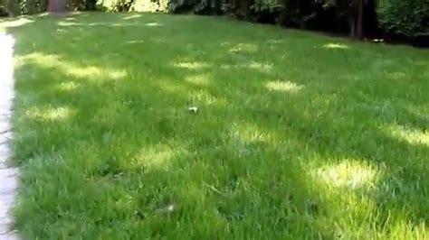 Schädlinge Im Rasen 3129 by Ungeziefer Im Rasen Ameisen Im Garten Und Rasen Bek Mpfen