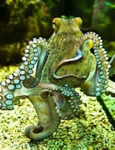 Octupus L by Green Octopus S O M A N Y B E A U T I F U L T H I