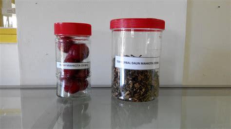 Teh Mahkota Dewa Nikmat Dan Sehat teh daun mahkota dewa minuman sehat dan berkhasiat