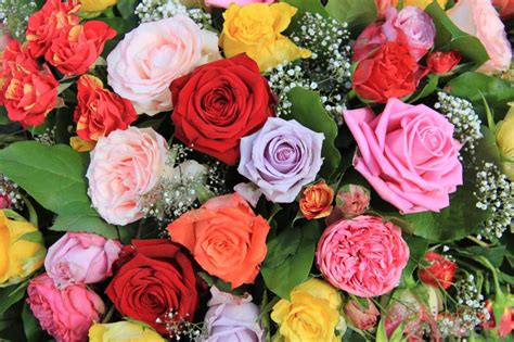 color roses s day color language bellenews