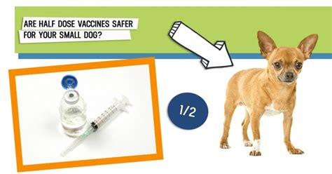 dogs naturally magazine can half dose vaccines reduce the risk of vaccine reactions in small dogs dogs