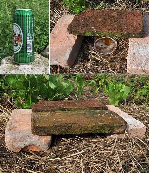 allevamento lumache in casa l invasione delle lumache orto naturale