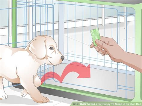how to get puppy to sleep in crate how to get your puppy to sleep in its own bed 13 steps