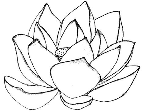 coloring page lotus flower lotus flower in blossom coloring pages batch coloring