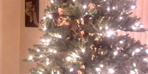 christmas tree disasters cat s tree antics will bring you some much needed cheer huffpost