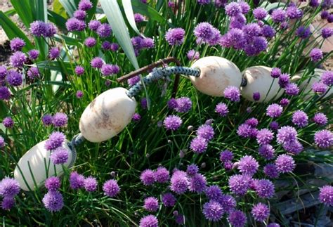 low growing summer perennials