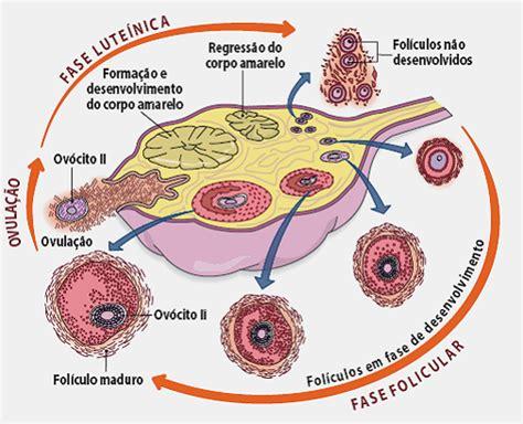 Calendario Hormonal Hormone Regulation Ciclo Ov 225