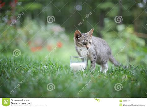 Cat Dreams Of Fish Birds Milk by Cat And Milk Stock Image Image Of Curious Blur