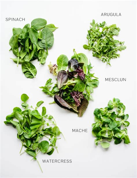 a guide to salad greens