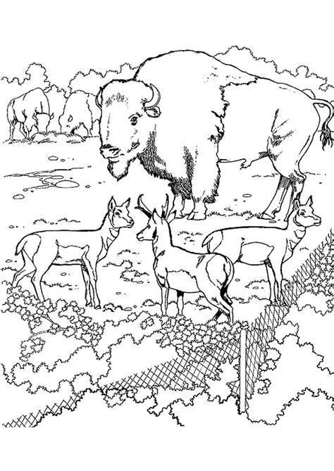 Coloriage zoo bison sur Hugolescargot.com
