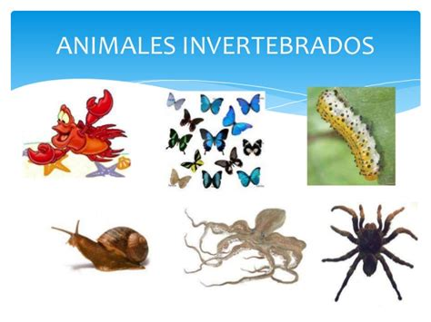 imagenes de animales invertebrados acuaticos animales vertebrados e invertebrados
