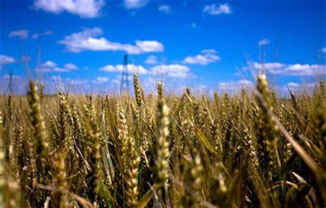 di commercio di treviso prezzi cereali cereali prezzi in crescita a giugno per il mais nazionale