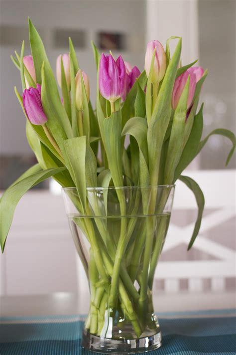 Piantare I Tulipani In Vaso by Tulipani In Vaso Acqua With Tulipani In Vaso Acqua Come