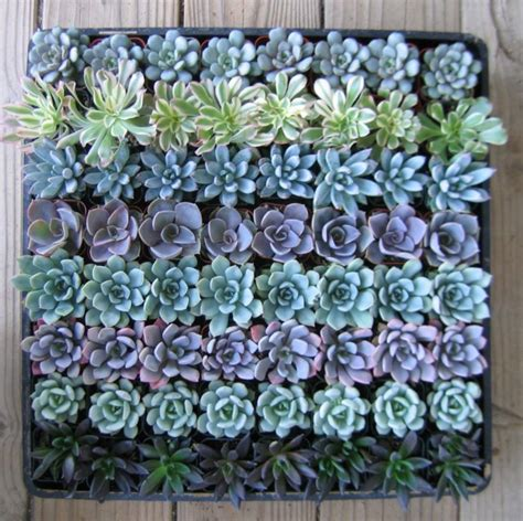 amazon succulents 35 succulent gardening ideas for small creative container