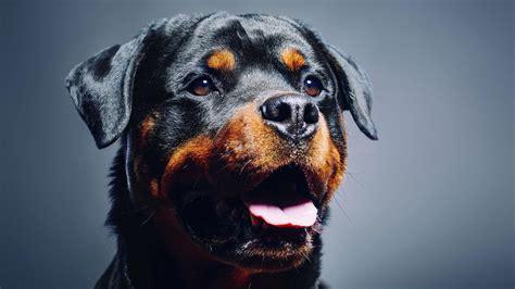 big breed top 10 large breeds