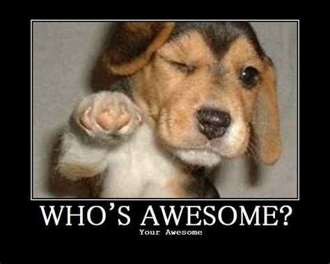 awesome puppy who s awesome this puppy who sawesome ask metafilter