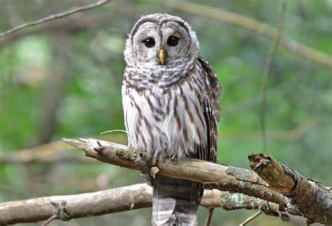 wildlife watching in pennsylvania visitpa