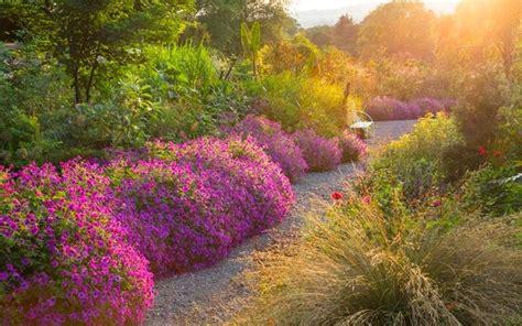 geranium varieties  grow  telegraph