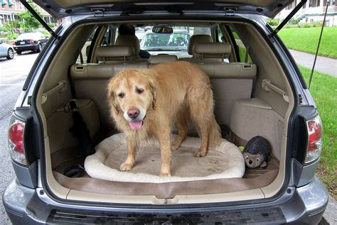 dogs in cars here comes the sun rspca issue warning about leaving dogs in cars