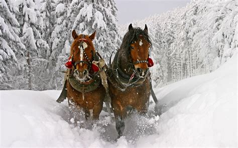 christmas wallpaper with horses festive things with horses