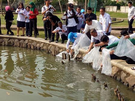Bibit Ikan Lele Di Bandar Lung 15 ribu bibit ikan ditebar di kolam taman bintaro
