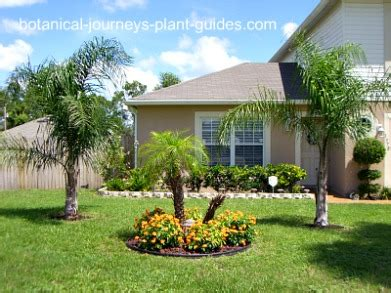 palm trees in front yard front yard landscaping tropical ideas home decorating ideas