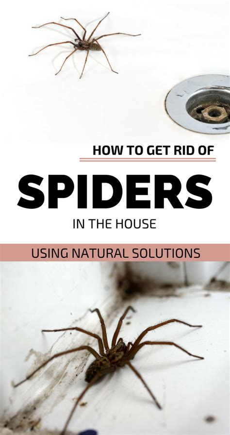 how to kill spiders in house how to kill spiders in house 28 images how to safely