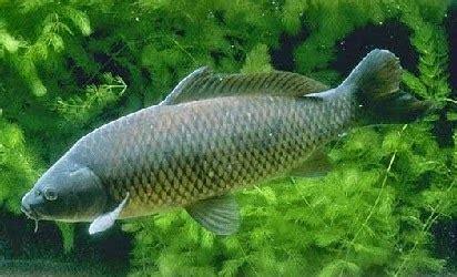 berbagai macam umpan jitu mancing ikan fish bait