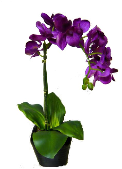 Orchid Plant Pin By Mayra Guerra Magana On For The Home