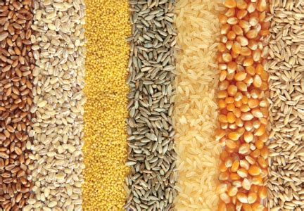 whole grains summit study touts benefits of replacing refined grains with