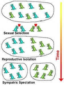 Allopatric speciation definition bioap ch 24 collaboration