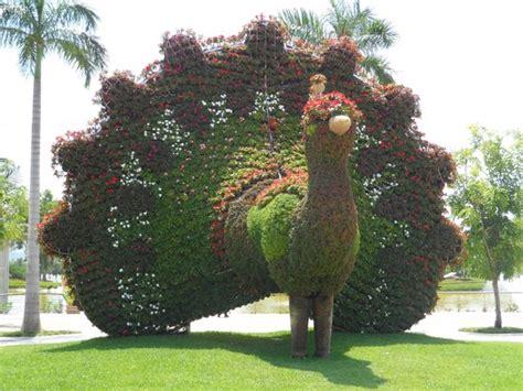 imagenes jardines de mexico fotos de jojutla im 225 genes de jojutla morelos tripadvisor
