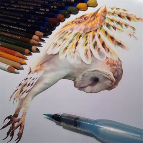 realistic animal drawings surrounded by the tools used to