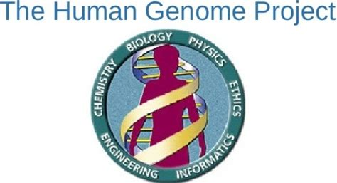section 13 2 the human genome project human genome project and treatment with genes genes
