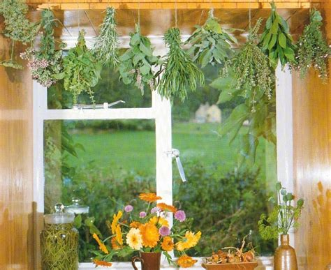 growing herbs grow herbs indoors grow chives all year even when the