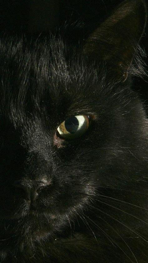black cat wallpaper iphone iphone wallpaper black cat my hd wallpapers