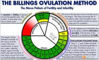 Calendars Days Calculator Ovulation Calendar And Ovulation Chart Fertility Friend