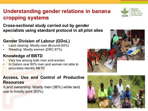 understanding alba the progress problems and prospects of alternative regionalism in america and the caribbean books rtb led international alliance for banana bunchy top