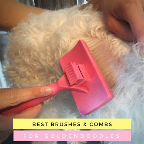 hair brush doodle best 25 goldendoodle grooming ideas on