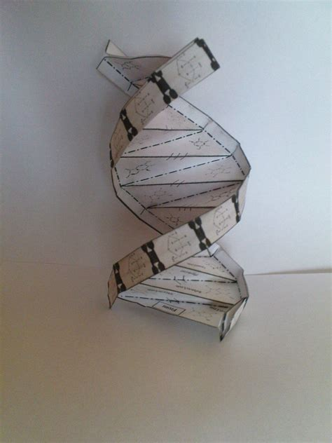 Origami Dna Model - origami dna helix by szaman1701 on deviantart