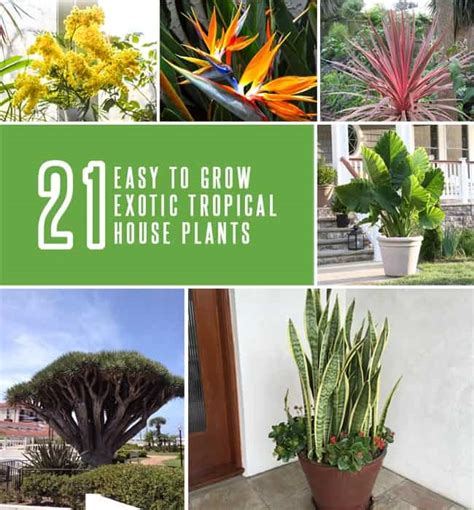exotic house plants 21 exotic tropical house plants that are easy to grow gardenoid