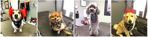 grooming colorado springs all our groovy grooming services in colorado springs colorado springs groomer
