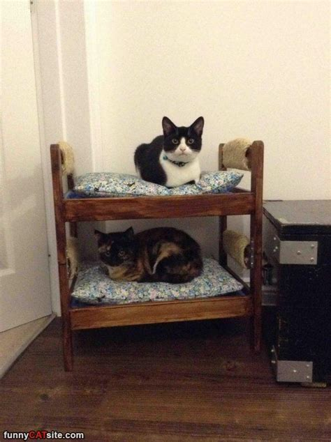 Bunk Beds For Cats Bunk Cats