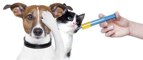 what does my puppy need what vaccinations does my cat need petcloud