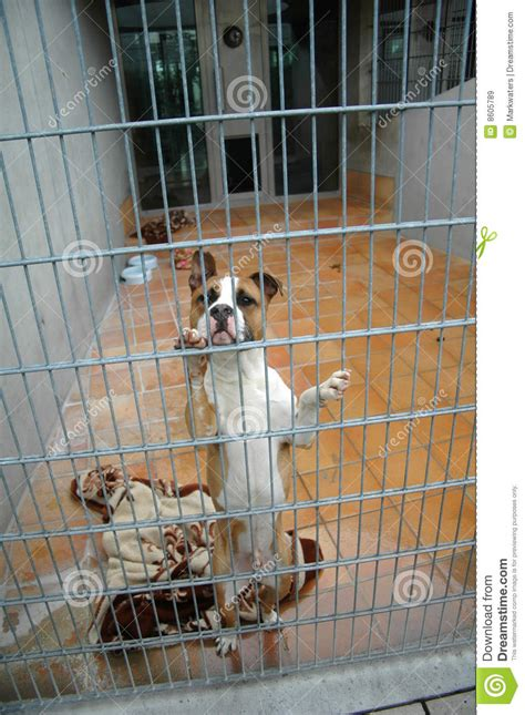 fighting dogs   cage stock image image  caution