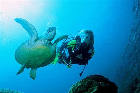 dive gili islands dive turtle 1200 215 800 villa almarik