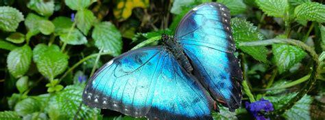 dancing wings butterfly garden  strong